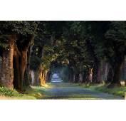 Nature Landscape Sunrise Trees Tunnel Grass Road