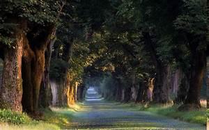 nature, , landscape, , sunrise, , trees, , tunnel, , grass, , road
