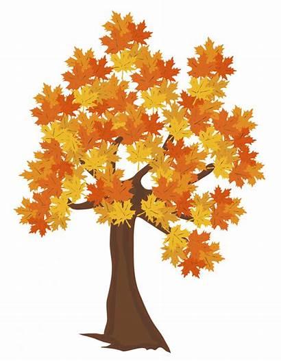 Tree Fall Clipart Trees Autumn Clip Transparent
