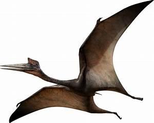 Quetzalcoatlus | Dinosaur Wiki | Fandom powered by Wikia  Quetzalcoatlus