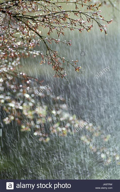 japan kyoto baum ast detail regen inselstaat