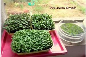 Comment Faire Germer Une Graine : les graines germ es graines de vie ~ Melissatoandfro.com Idées de Décoration