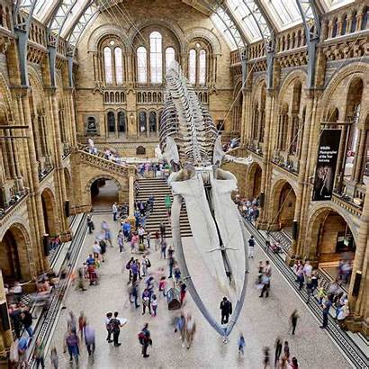 Museum History Natural Science London Hintze Hall