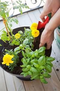 Quand Planter Les Tomates Cerises : les 79 meilleures images du tableau conseils jardinage ~ Farleysfitness.com Idées de Décoration