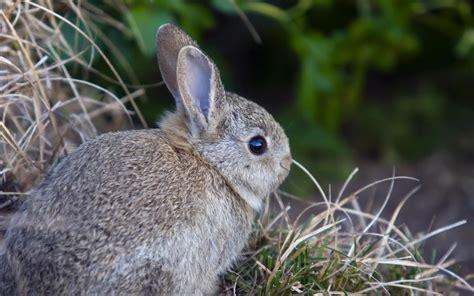 Your Wallpaper: Cute Rabbit Wallpaper