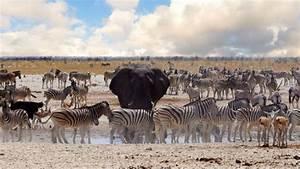 Top 10 Des Meilleurs 4x4 : top 10 des meilleurs endroits pour faire un safari photo viago ~ Medecine-chirurgie-esthetiques.com Avis de Voitures