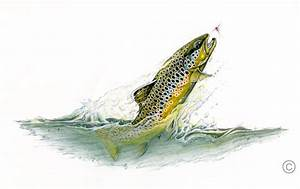 'Brown Trout' - Sportfish Series - Dave & Emily Whitlock