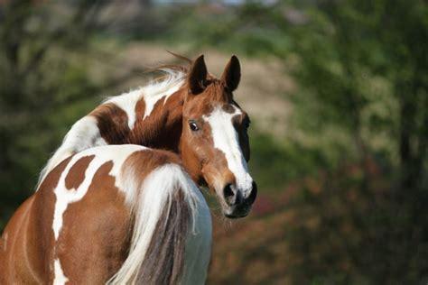 kotwasser beim pferd wie sie durchfall homoeopathisch