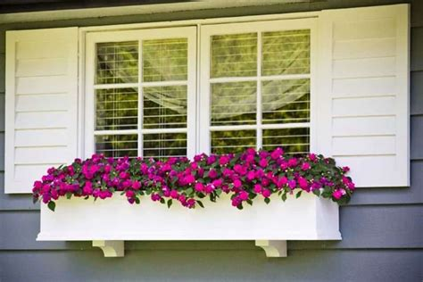Flowering House Plants For Windows by Beautiful Window Box Plants Wearefound Home Design