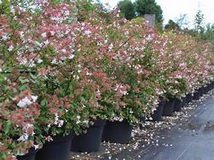 Quoi Planter En Automne : fleurs planter en juillet ~ Melissatoandfro.com Idées de Décoration