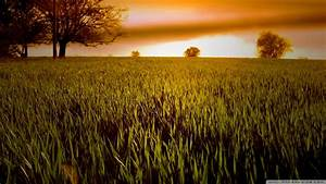 Download Wheat Field At Sunset Wallpaper 1920x1080 ...