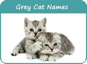 names for grey cats grey cat names distinctive names for grey kittens page 5