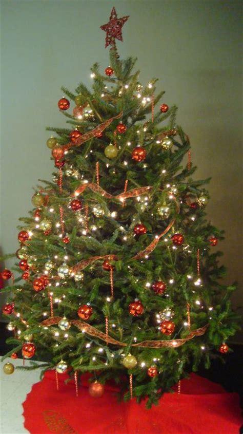 christmas tree food water tree care carolina cooperative extension