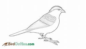 Bird Outline Sparrow Images
