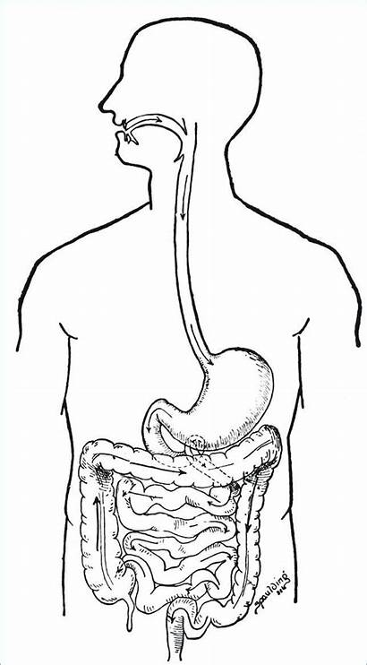 Human Digestive System Coloring Clipart Biologie Anatomie