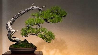 Bonsai Museum 4k Omiya Wallpapers Ultra Tree