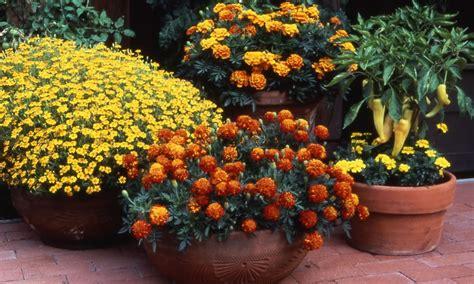 garden in pots beginners flower gardening for beginners archives acegardener