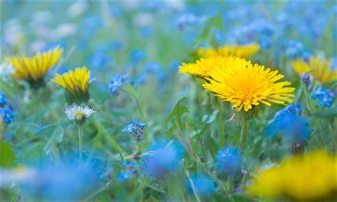Gelb/Blau °°° (Forum für Naturfotografen)