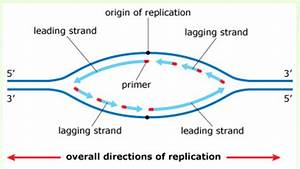 exam 3 chs 5 dna structure and replication machinery With explain how dna serves as its own template during replication