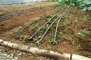 What Is Bamboo Drip Irrigation System? - Detail Guide