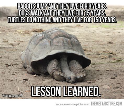 Life Lesson Memes - an important lesson from turtles the meta picture