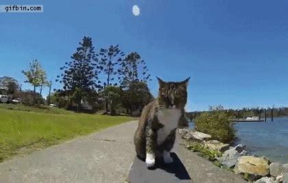 skating cat cute cat gifs