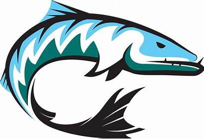 Barracuda Clipart Drawing Mascot Clip Riverview Station