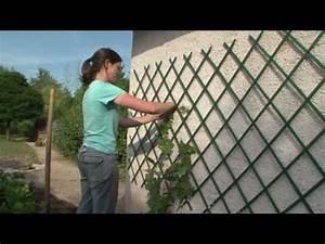 Les vignes les conseils de plantation d39horti sologne for Apprendre a peindre un mur