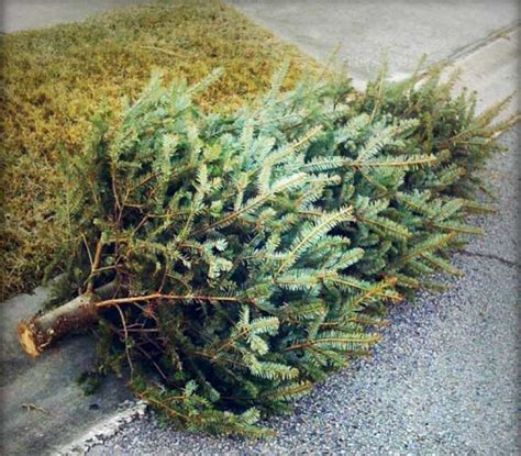 ready to take down the tree here is how to recycle in reston reston now