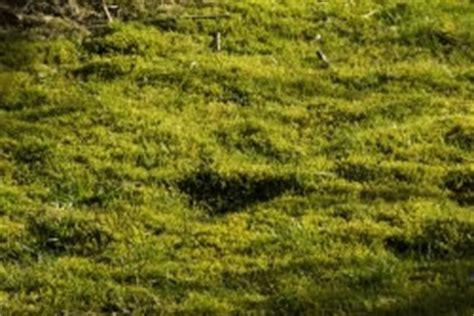 Im Rasen Loswerden by Moos Im Rasen Entfernen Und Dauerhaft Loswerden