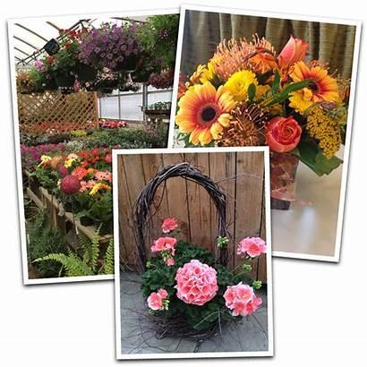 Flowers Ross Plants Florist Pa