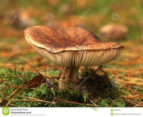 Pilz Garten Braun by Toadstool Stockfoto Bild Herbst Braun Urlaub Gold