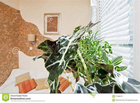 plante verte chambre pièce ensoleillée de chambre à coucher avec la lame de