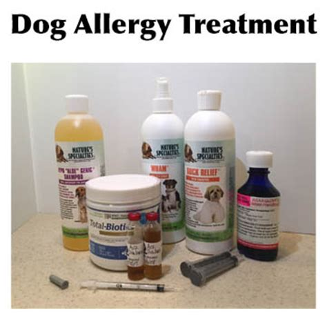 canine allergies practical advice