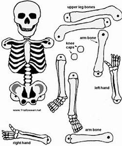 make a paper skeleton to label bones school pinterest With skeleton template to cut out