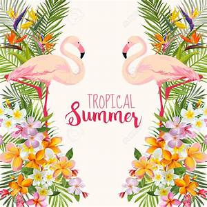 Tropics clipart tropical bird - Pencil and in color ...