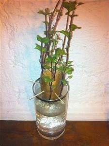 Culture De La Patate Douce : exp rience de jardinage pour l 39 cole ~ Carolinahurricanesstore.com Idées de Décoration