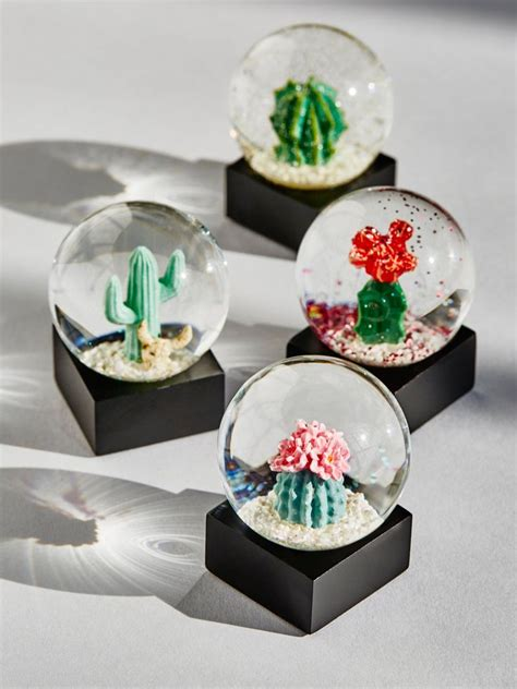 cactus ideas  pinterest succulents diy