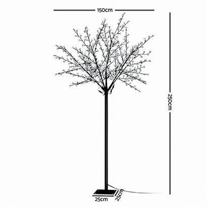 Twig Led 5m Blossom Tree Jingle Jollys