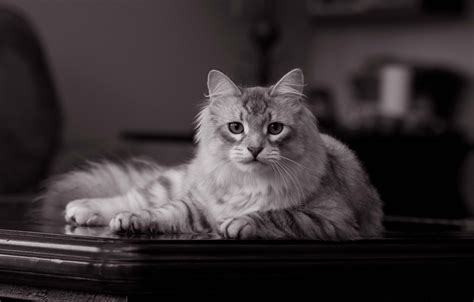 14 Innocent & Sweet Cute Cats Wallpapers Hd