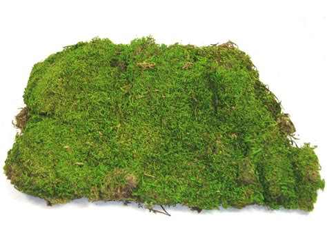 type of moss what kind of moss is safe for hermit crabs