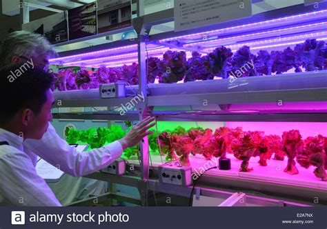 growing vegetables indoors with led lights tokyo japan 18th june 2014 led grow lights for growing