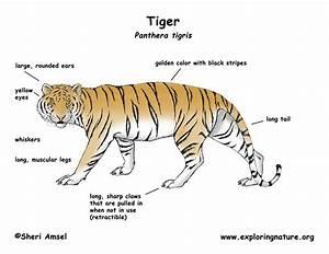 Unique Animal Characteristics