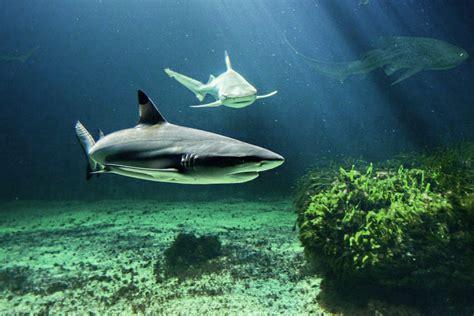 aquarium d olonne aquarium d olonne 28 images l aquarium des sables d olonne fred10 aquarium poisson l