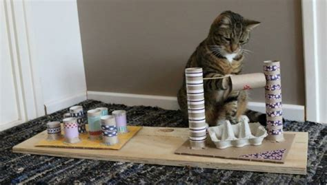 toilettenpapierrollen eierkartons fummelbrett katze