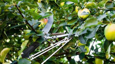 ratgeber obstbaeume tipps zu arten und pflege