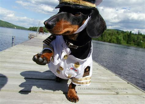 Dog Boat Captain Hat by Introducing Captain Crusoe Crusoe The Celebrity Dachshund