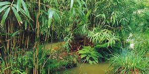 Plantes Exotiques Rustiques : un jardin aquatique exotique rustique jardins ~ Melissatoandfro.com Idées de Décoration