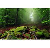 Nature Landscape Mist Forest Moss Leaves Morning