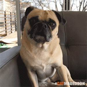 Surprised Dog GIF by truth - Find & Share on GIPHY